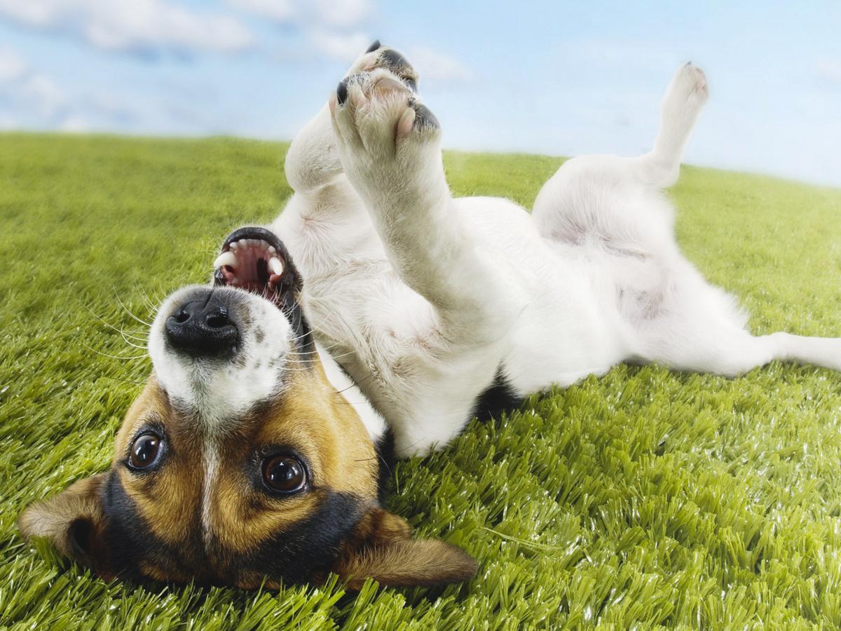 happ-dog